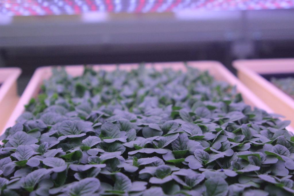 植物工場のイメージ写真